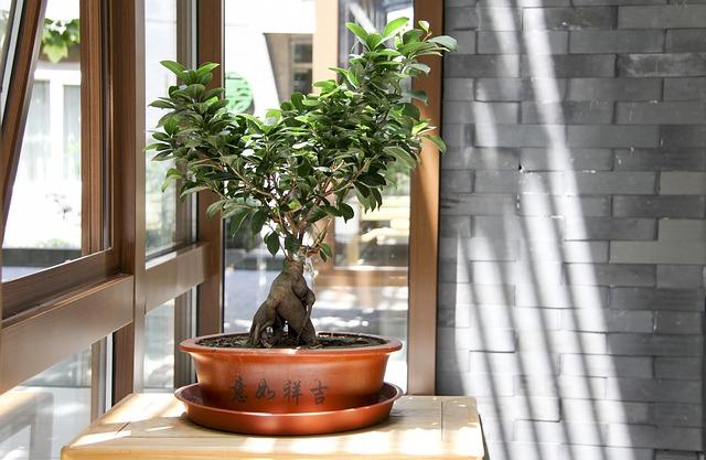 Grubosz - drzewko szczęścia